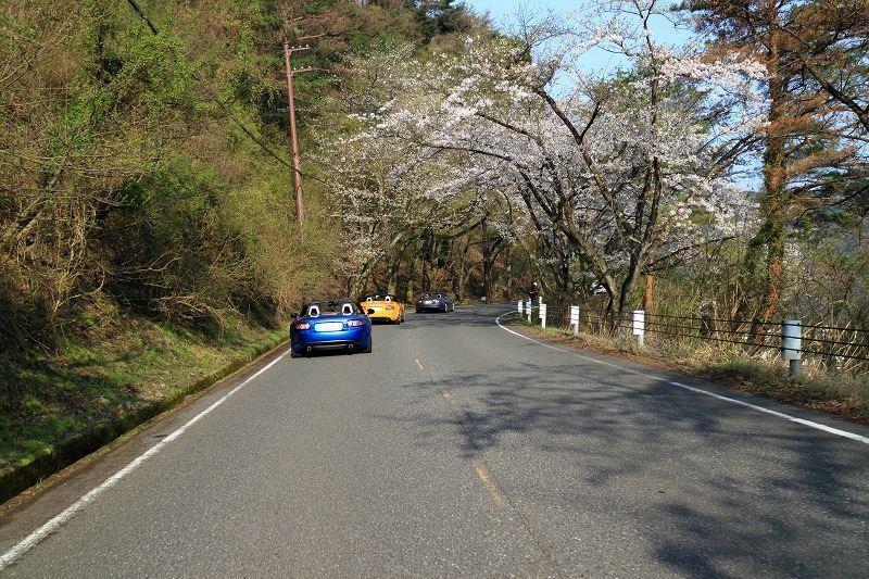 色出来すぎツーリングin海津大崎&秘密の桜トンネル18