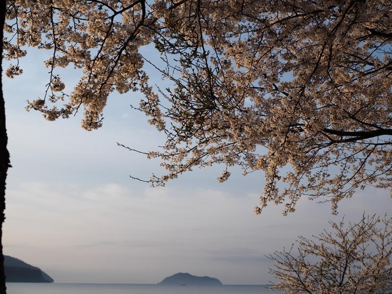 色出来すぎツーリングin海津大崎&秘密の桜トンネル06