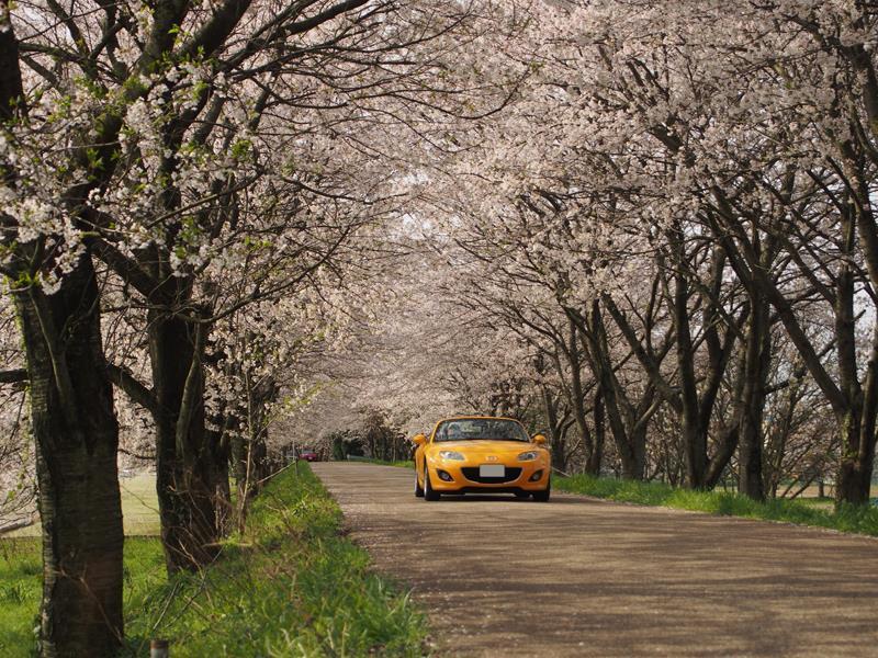 色出来すぎツーリングin海津大崎&秘密の桜トンネル30