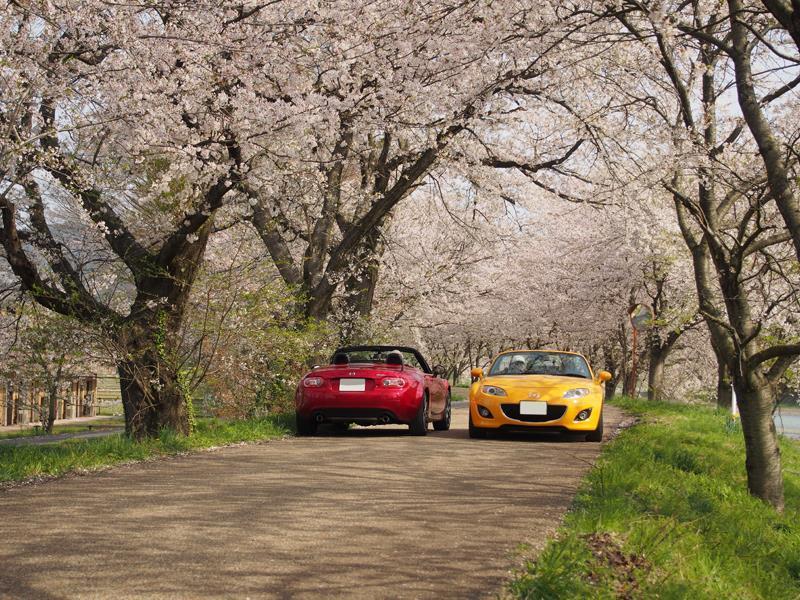 色出来すぎツーリングin海津大崎&秘密の桜トンネル31