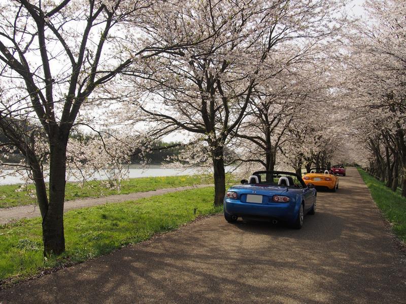 色出来すぎツーリングin海津大崎&秘密の桜トンネル29