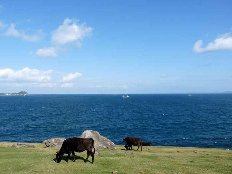 九州の旅(6日目) ~加部島(風の見える丘公園と杉の原牧場)~