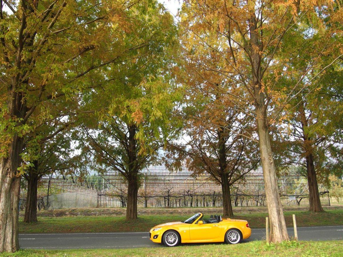 奥琵琶湖紅葉ドライブ 16