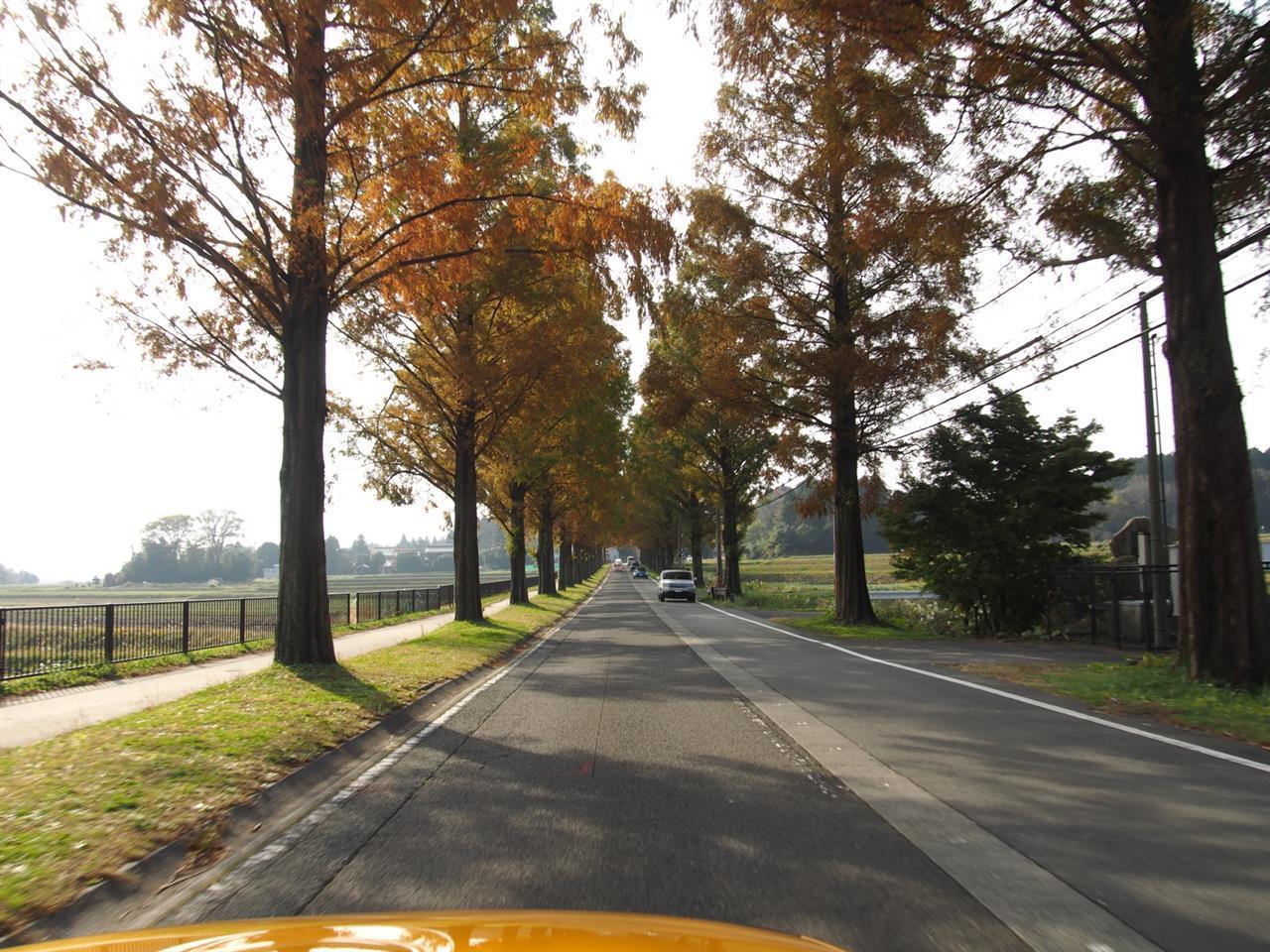奥琵琶湖紅葉ドライブ 08