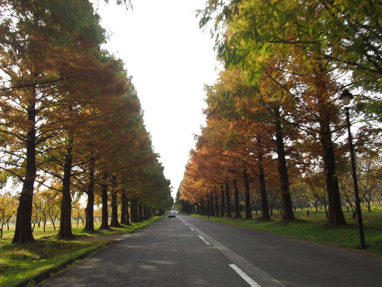 奥琵琶湖紅葉ドライブ 09