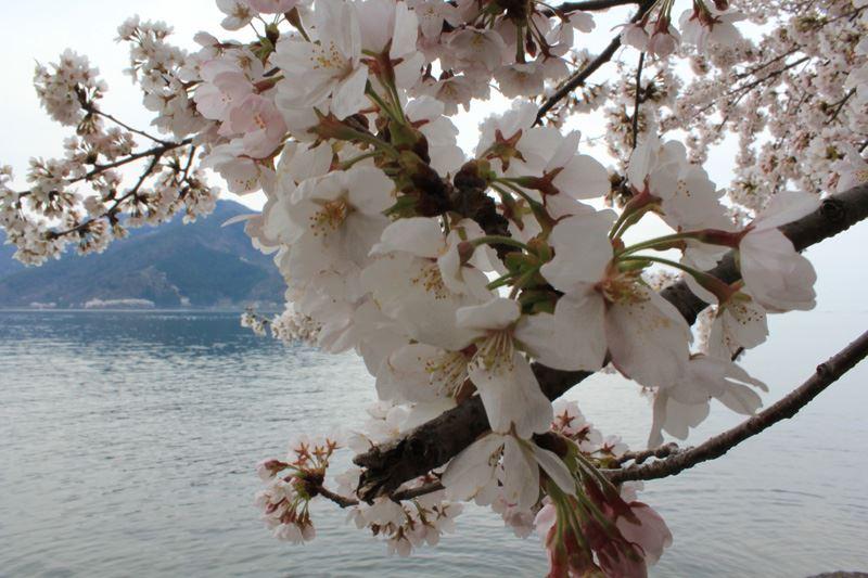 奥琵琶湖04