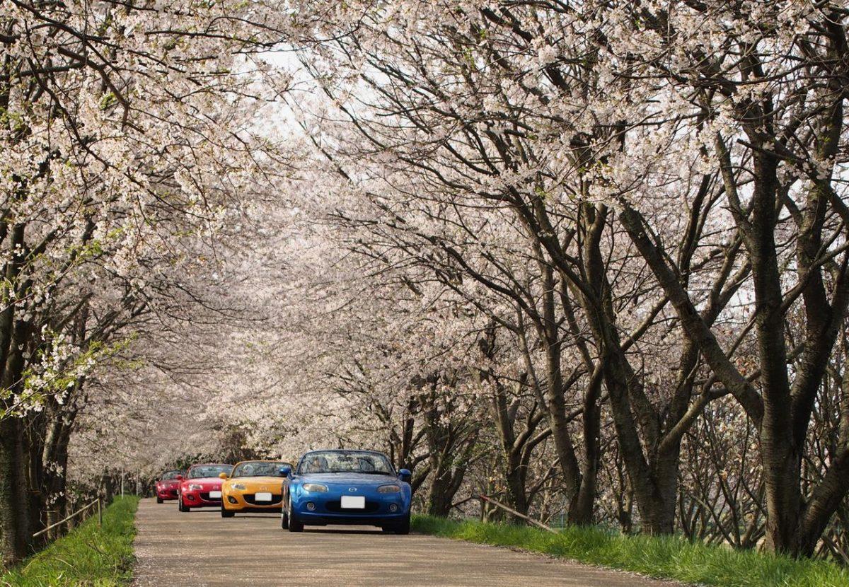 色出来すぎツーリング in 海津大崎&秘密の桜トンネル (本編)