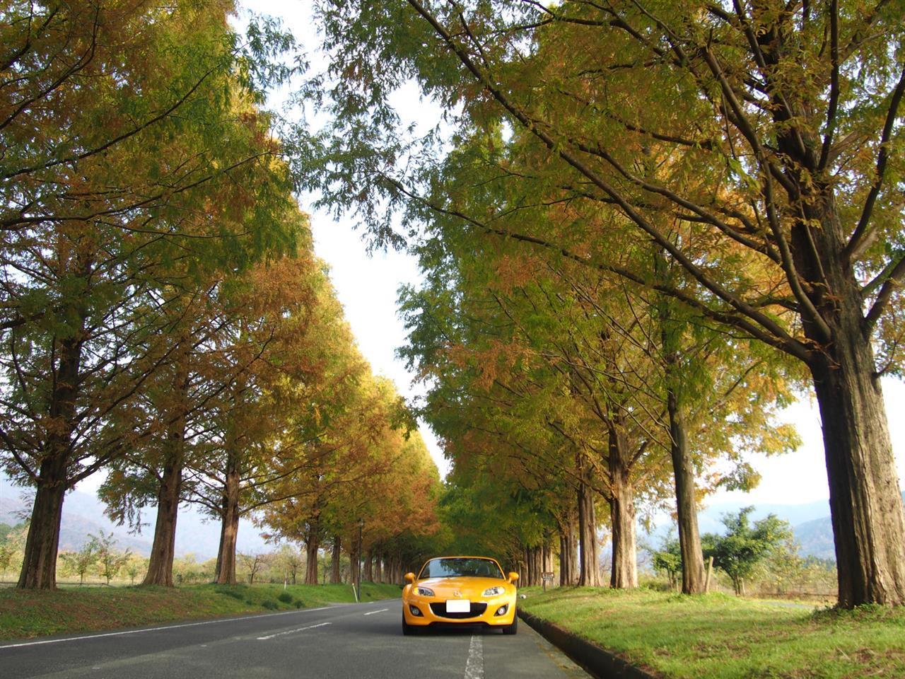奥琵琶湖紅葉ドライブ 14