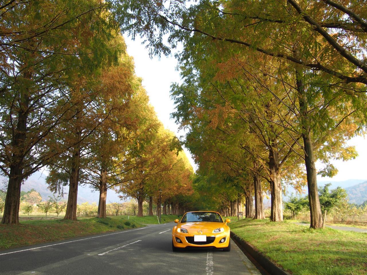 奥琵琶湖紅葉ドライブ 11