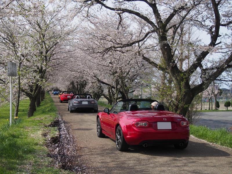 色出来すぎツーリングin海津大崎&秘密の桜トンネル25