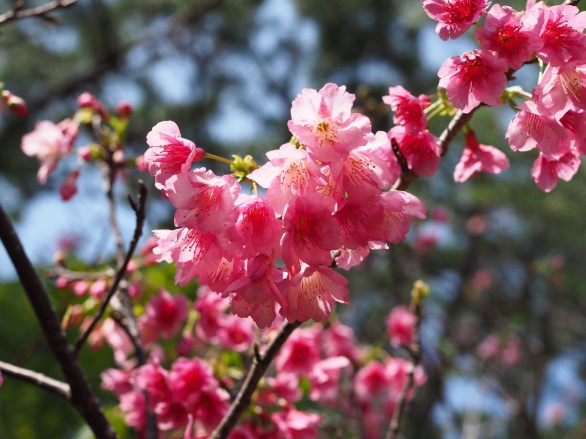 宮古島・沖縄本島の旅3日目25