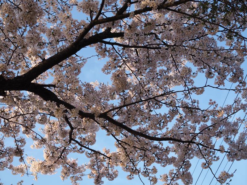 色出来すぎツーリングin海津大崎&秘密の桜トンネル05