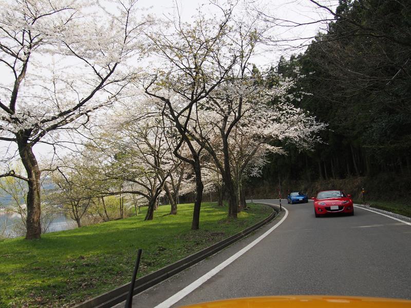 色出来すぎツーリングin海津大崎&秘密の桜トンネル34