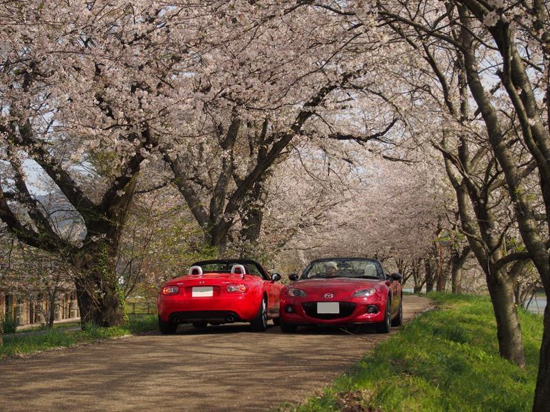 色出来すぎツーリングin海津大崎&秘密の桜トンネル32