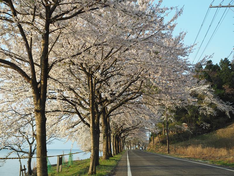 色出来すぎツーリングin海津大崎&秘密の桜トンネル03