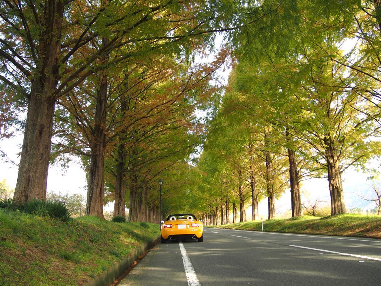 奥琵琶湖紅葉ドライブ 05
