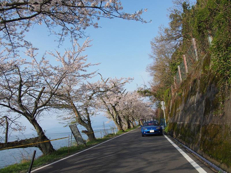 色出来すぎツーリングin海津大崎&秘密の桜トンネル12
