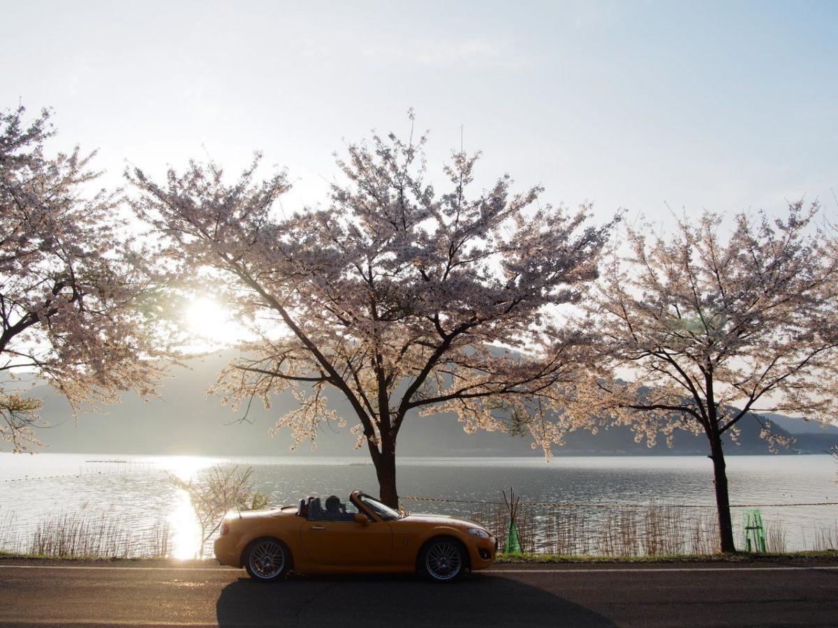 海津大崎&秘密の桜トンネル 01