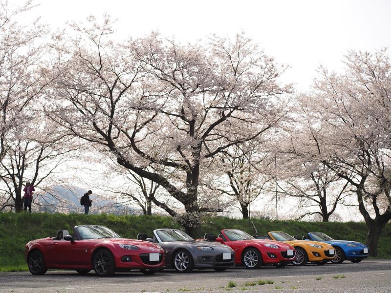 色出来すぎツーリングin海津大崎&秘密の桜トンネル33