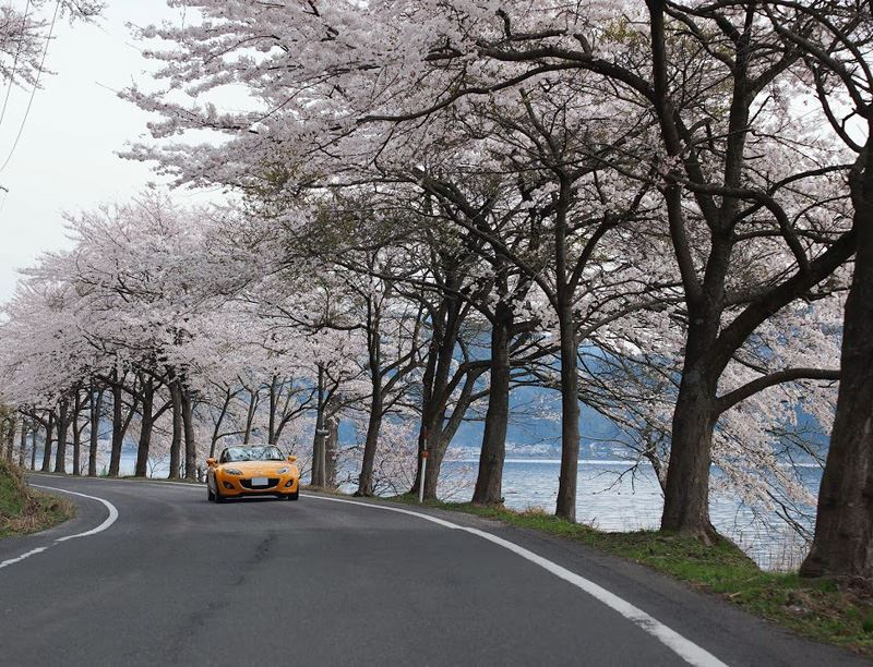 奥琵琶湖07