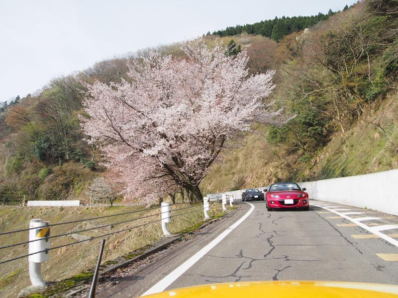 色出来すぎツーリングin海津大崎&秘密の桜トンネル24