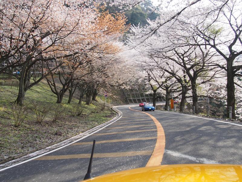 色出来すぎツーリングin海津大崎&秘密の桜トンネル19