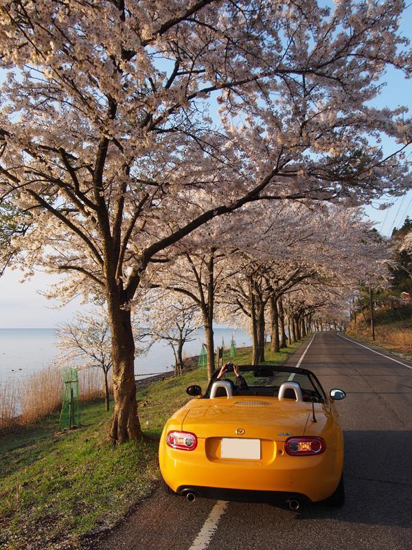 色出来すぎツーリングin海津大崎&秘密の桜トンネル07