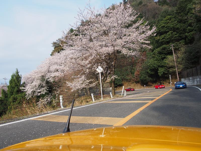 色出来すぎツーリングin海津大崎&秘密の桜トンネル20
