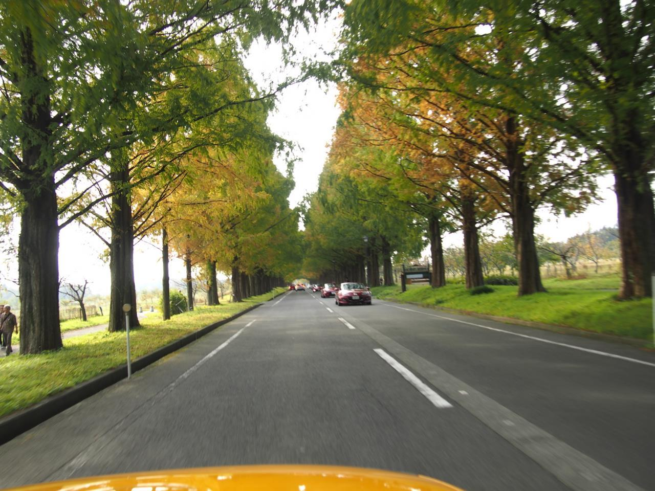 奥琵琶湖紅葉ドライブ 10