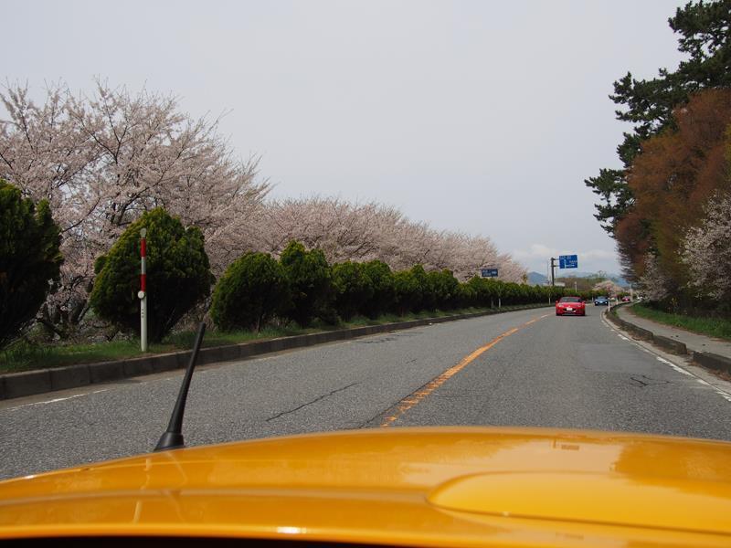 色出来すぎツーリングin海津大崎&秘密の桜トンネル40