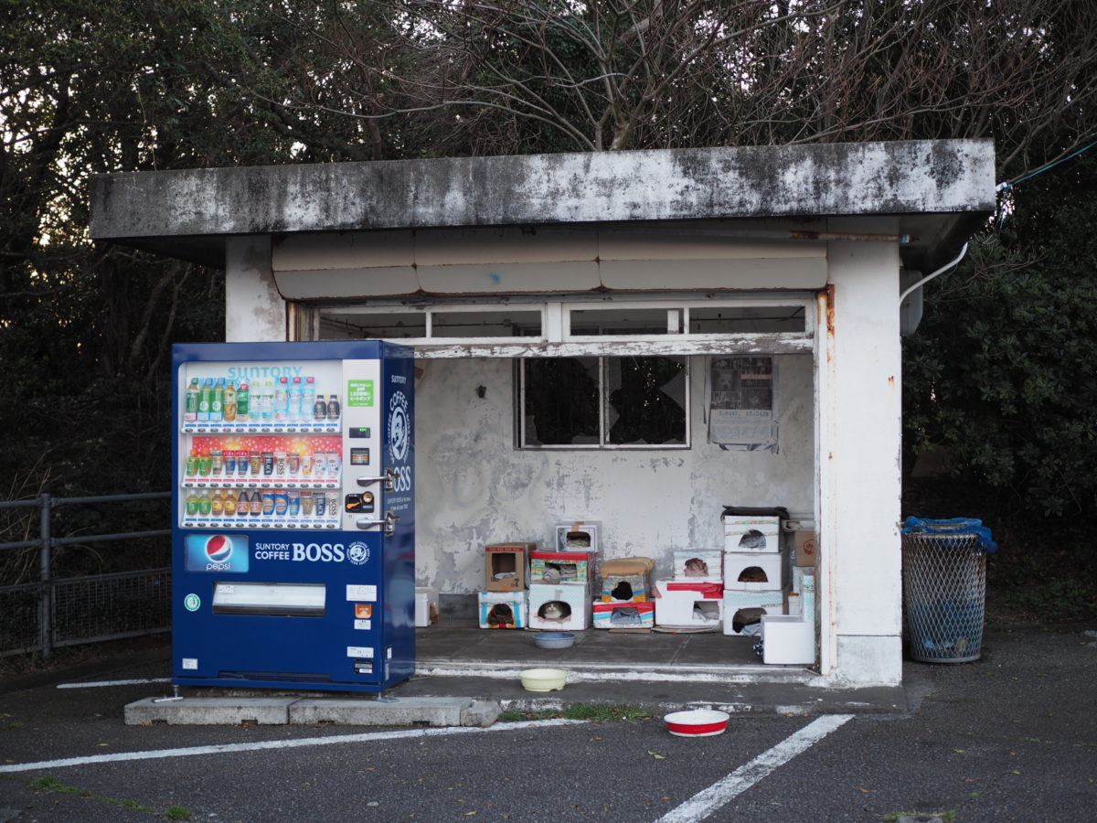09_室戸スカイライン