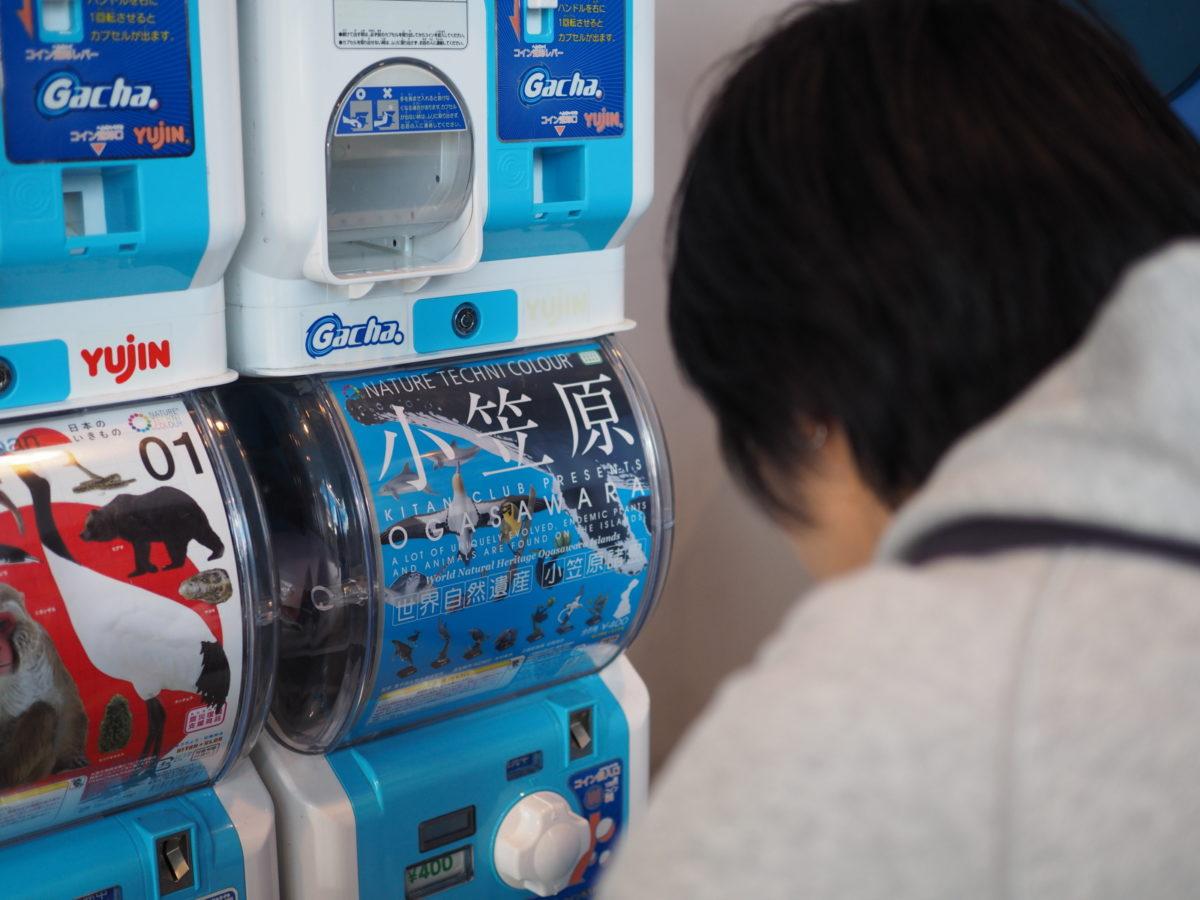 42_日和佐うみがめ博物館