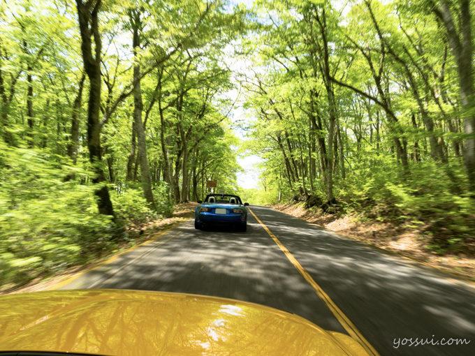冠雪と新緑の大山絶景ドライブ